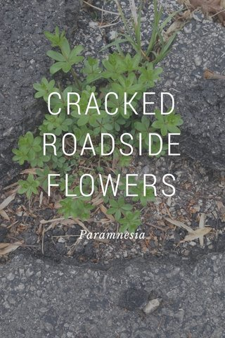 CRACKED ROADSIDE FLOWERS Paramnesia