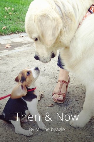 Then & Now By MJ The beagle