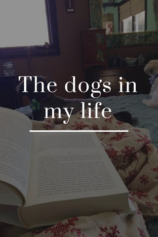 The dogs in my life