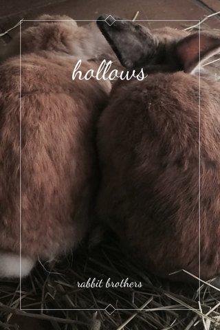 hollows rabbit brothers