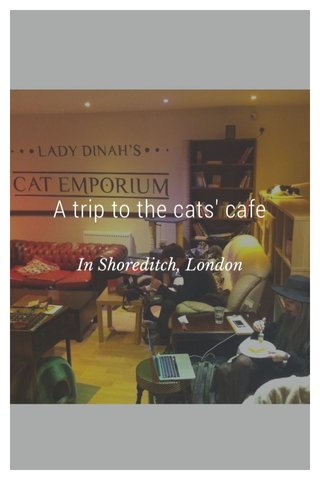 A trip to the cats' cafe In Shoreditch, London