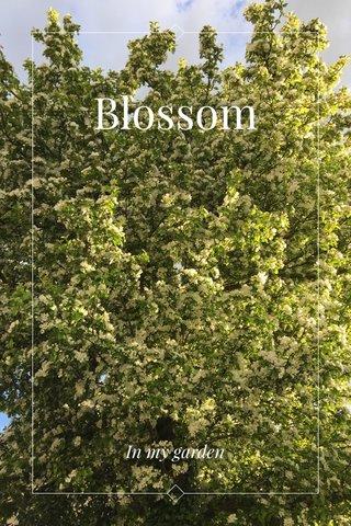 Blossom In my garden