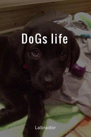 DoGs life Labrador