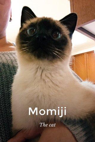 Momiji The cat