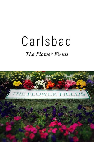 Carlsbad The Flower Fields