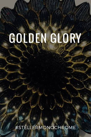 GOLDEN GLORY #STELLERMONOCHROME