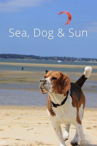 Sea, Dog & Sun