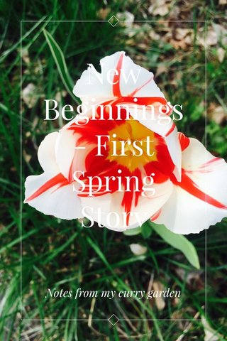 New Beginnings - First Spring Story Notes from my curry garden