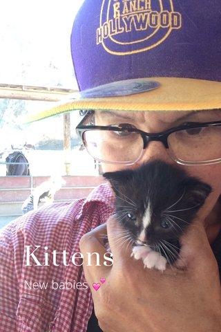 Kittens New babies 💕