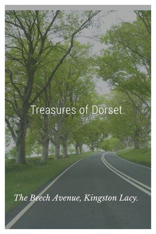 Treasures of Dorset. The Beech Avenue, Kingston Lacy.