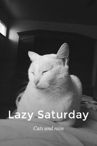 Lazy Saturday Cats and rain