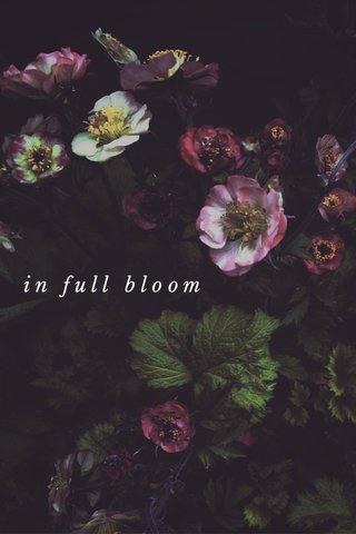 IN BLOOM in full bloom