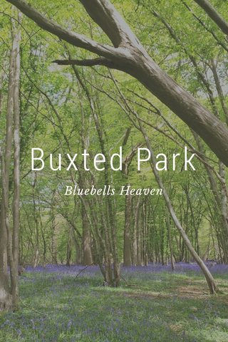 Buxted Park Bluebells Heaven