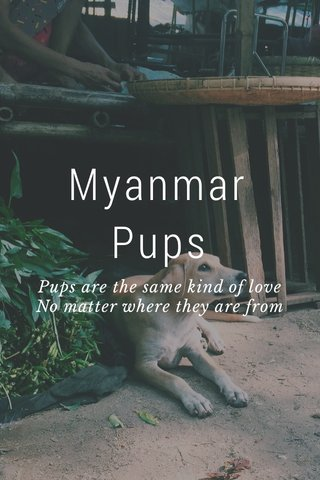 Myanmar Pups Pups are the same kind of love No matter where they are from