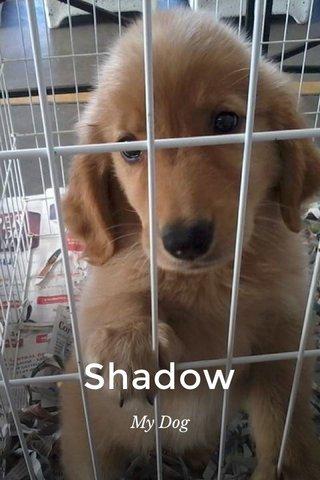Shadow My Dog