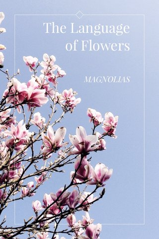 The Language of Flowers MAGNOLIAS