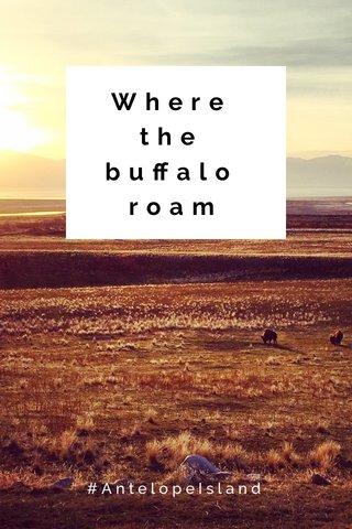 Where the buffalo roam #AntelopeIsland