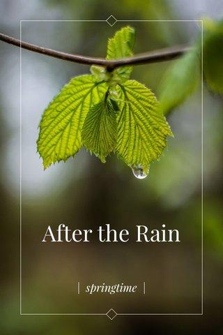 After the Rain   springtime  