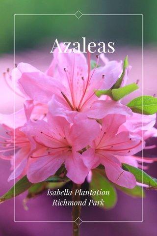 Azaleas Isabella Plantation Richmond Park