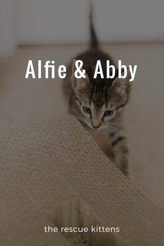 Alfie & Abby the rescue kittens