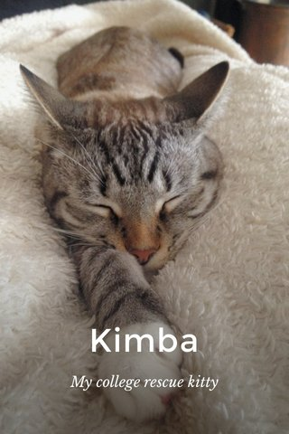 Kimba My college rescue kitty