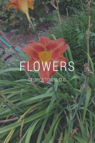 FLOWERS GEORGETOWN, D.C.