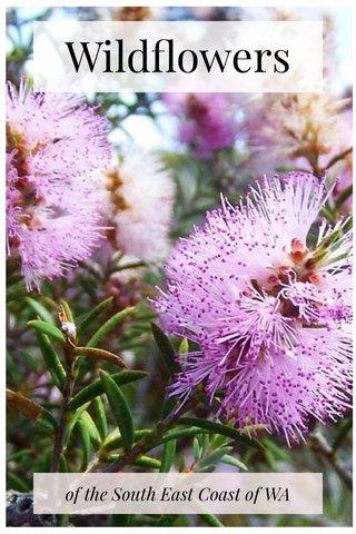 Wildflowers of the South East Coast of WA