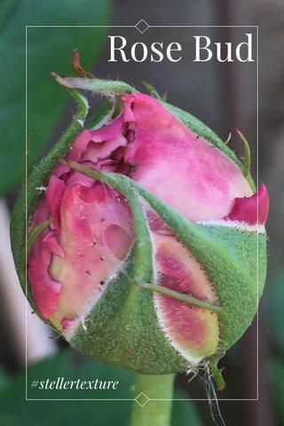 Rose Bud #stellertexture