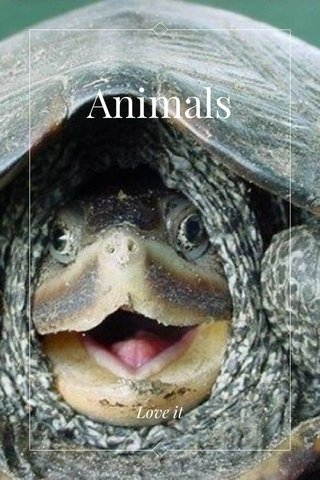 Animals Love it