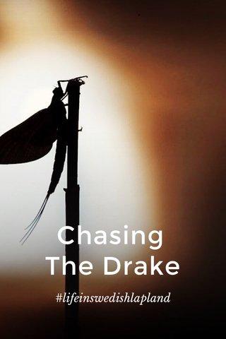 Chasing The Drake #lifeinswedishlapland