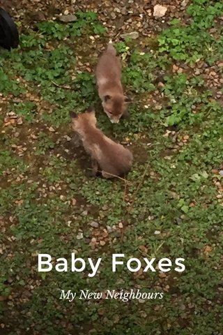 Baby Foxes My New Neighbours