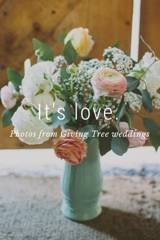 It's love. Photos from Giving Tree weddings