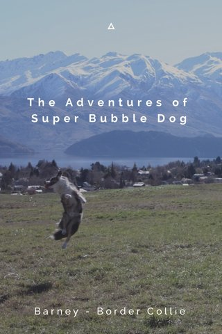 The Adventures of Super Bubble Dog Barney - Border Collie