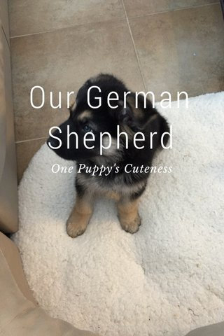 Our German Shepherd One Puppy's Cuteness