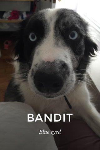BANDIT Blue eyed