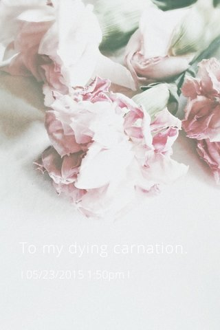 To my dying carnation. I 05/23/2015 1:50pm I