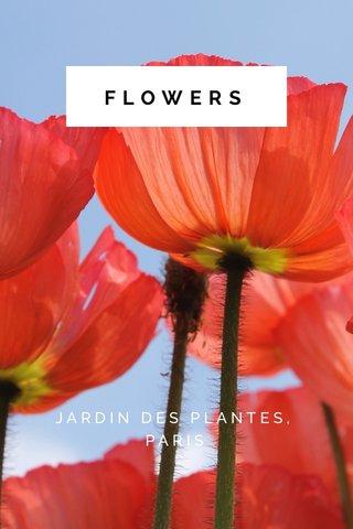 FLOWERS JARDIN DES PLANTES, PARIS