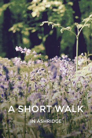A SHORT WALK IN ASHRIDGE