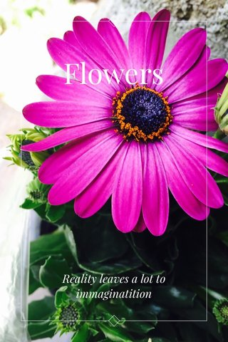 Flowers Reality leaves a lot to immaginatition