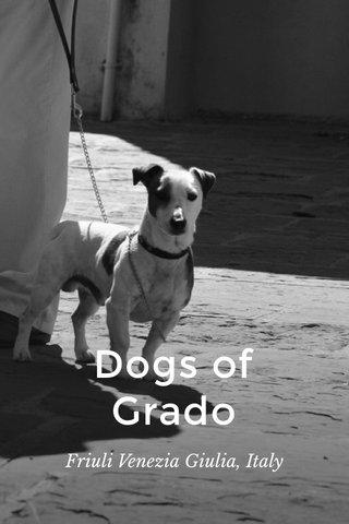 Dogs of Grado Friuli Venezia Giulia, Italy