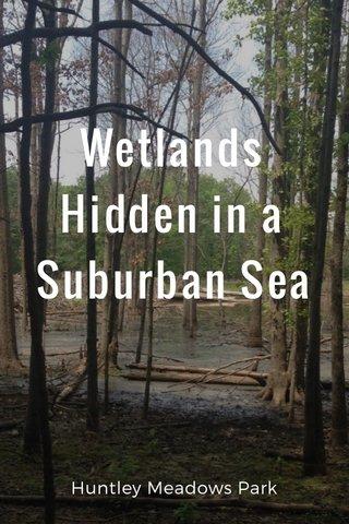 Wetlands Hidden in a Suburban Sea Huntley Meadows Park