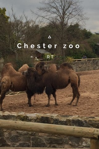 Chester zoo RT