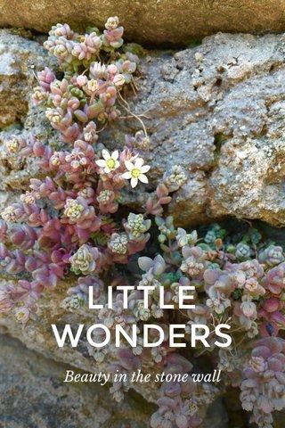 LITTLE WONDERS Beauty in the stone wall