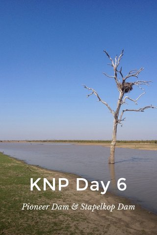 KNP Day 6 Pioneer Dam & Stapelkop Dam