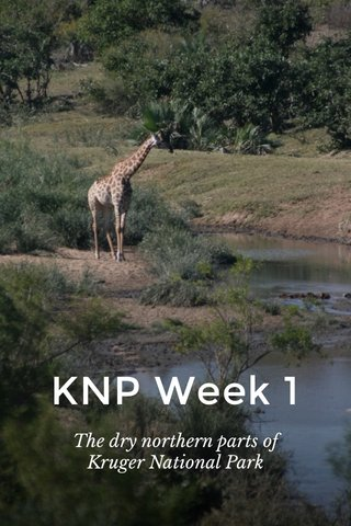 KNP Week 1 The dry northern parts of Kruger National Park