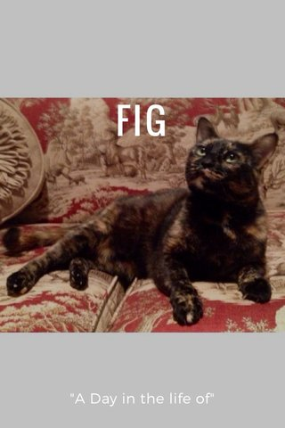 "FIG ""A Day in the life of"""