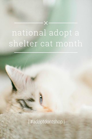 national adopt a shelter cat month | #adoptdontshop |