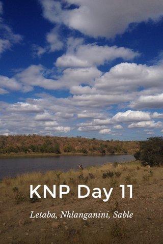 KNP Day 11 Letaba, Nhlanganini, Sable