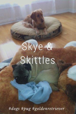 Skye & Skittles #dogs #pug #goldenretriever