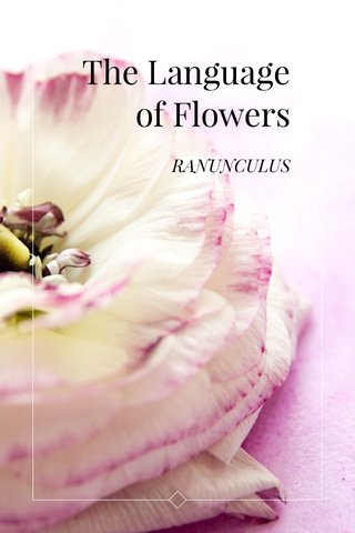 The Language of Flowers RANUNCULUS